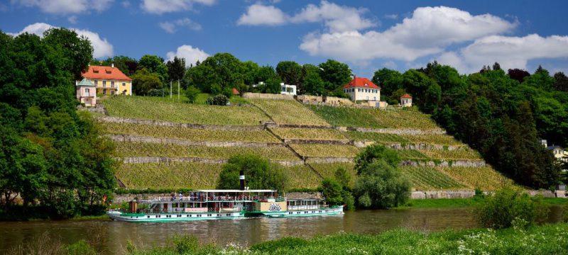 Elbeschiff am Elbhang - Dinglingers Weinberg, © Frank Exß, DML-Lizenz